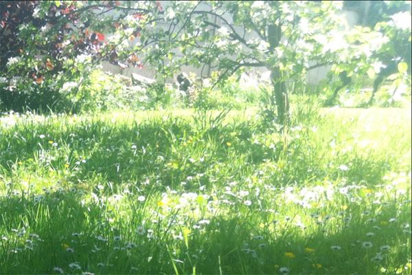 jardineclat